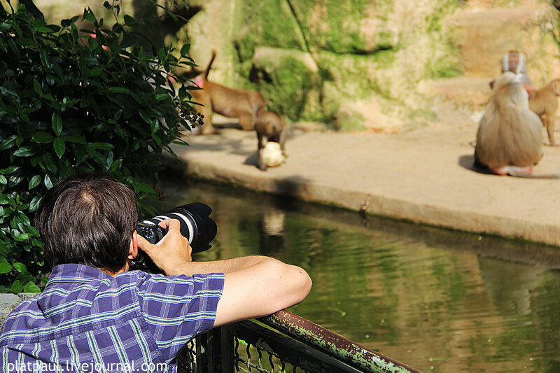 кельнский зоопарк 2013
