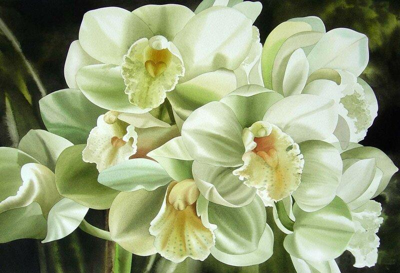 Акварельные орхидеи Alfredа Galura- Alfredа Galura