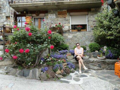 цветы сеткасес