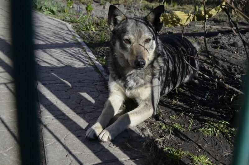 собака на даче