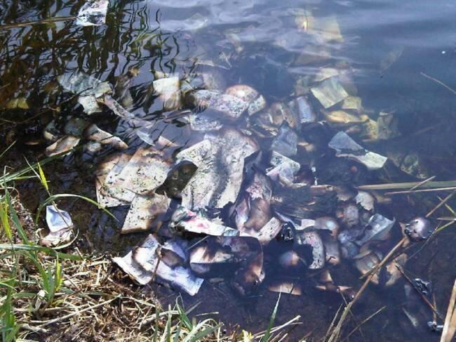 Британец нашёл 60 тыс. фунтов стерлингов в реке