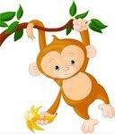 baby-monkey.jpg