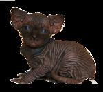 Cat-Mika.png