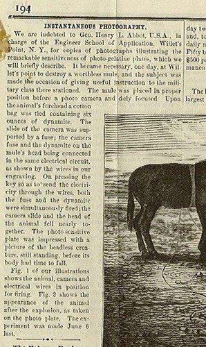 Развлечения англосаксонского зверья.