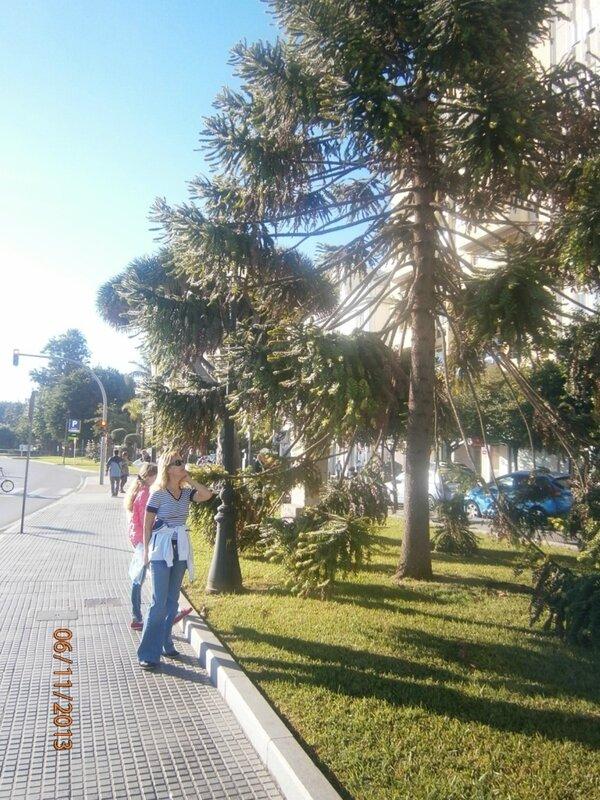 Ноябрь-2013 под пальмами в фартовом круизе на Коста Фортуна