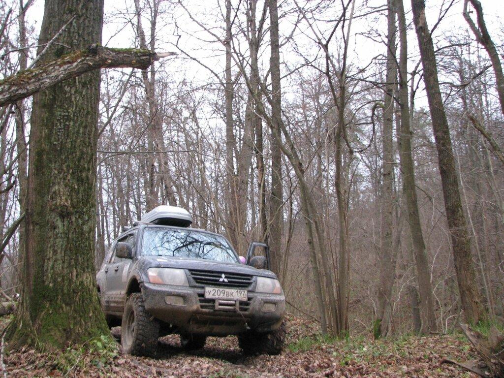 Синий Паджерик в лесу