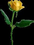 Holliewood_RoseIsARose_Rose12.png