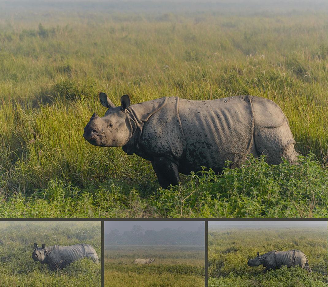 Фотография 13. Носорог – жемчужина парка Kaziranga National Park, хотя здесь есть также около сотни бенгальских тигров, стада оленей и буйволов.