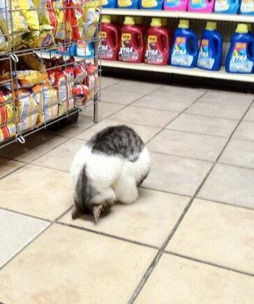 Кот мусульманин, молитва у него прямо в магазине, котошахид епт