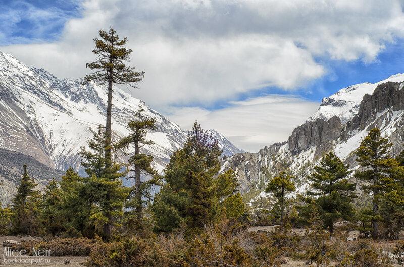 Спустились до уровня леса, гималаи, непал, горы
