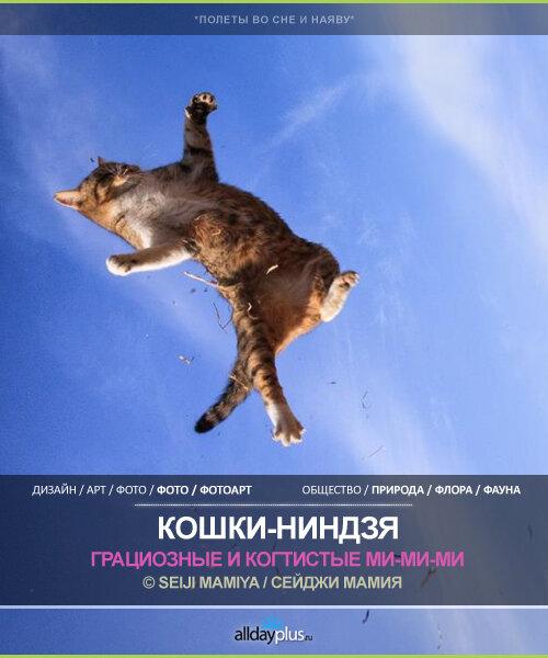 Японские кошки-ниндзя от © Seiji Mamiya. 15 прыгающих и крадущихся ниндзя-ми-ми-ми