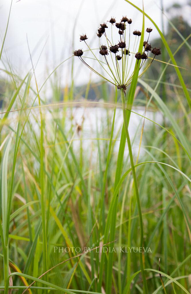 Озеро Каменное, сквозь траву