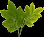 foliage01.png