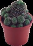 cactus (27).png