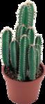 cactus (31).png