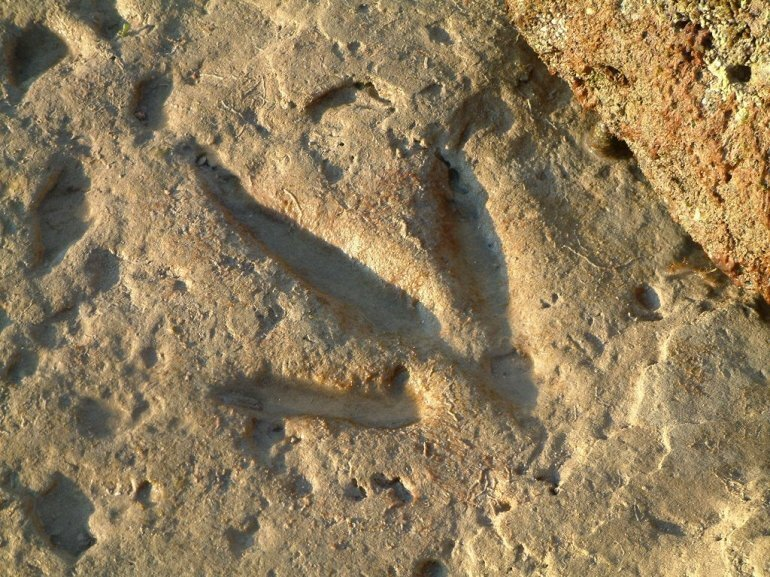 Следы динозавров в Гантум Поинт