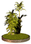 Palms  (48).png