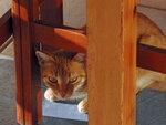 Критские коты