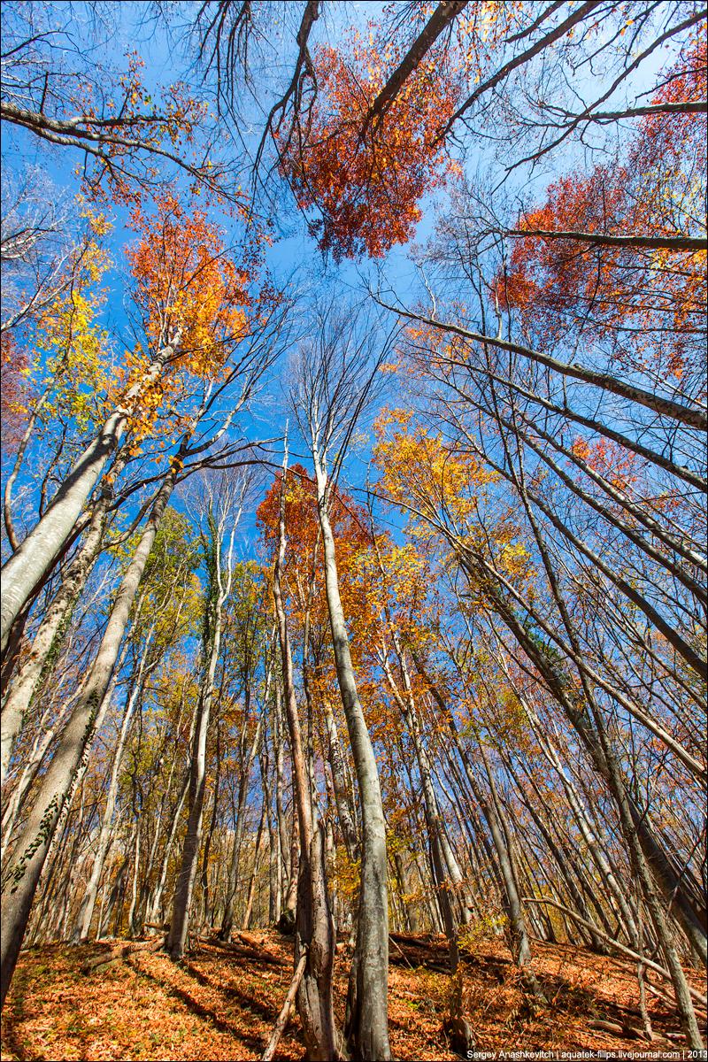 Две стороны осеннего леса