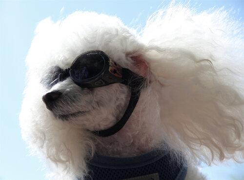 Тебе очень идут эти очки! Они украшают твой чуткий носик!