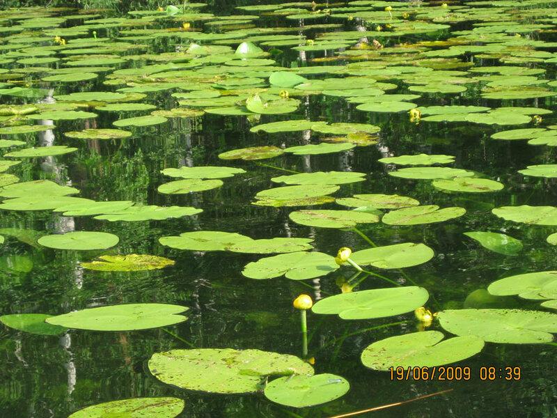 Чистейшая вода (15.05.2013)