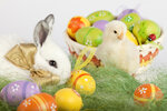 Cute bunny and baby chicken sitting on grass with Easter eggs in