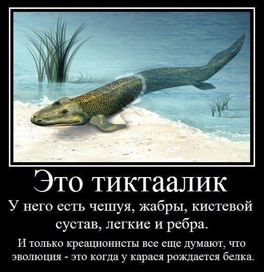 http://img-fotki.yandex.ru/get/6710/220630590.2/0_e03b3_ed49da01_XL.jpg