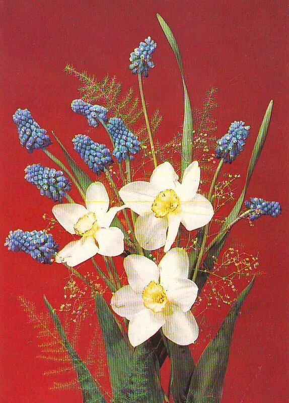 Текст открытки, открытка к 8 марта цветы нарциссы