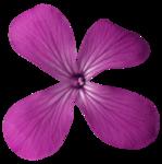 feli_ss_pink flower.png