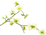Beautiful-Blossom_birdhouse1 (7).png