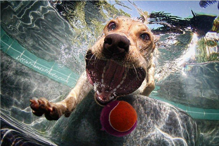 Одни собаки во время прыжка за игрушками выглядят крайне устрашающе: