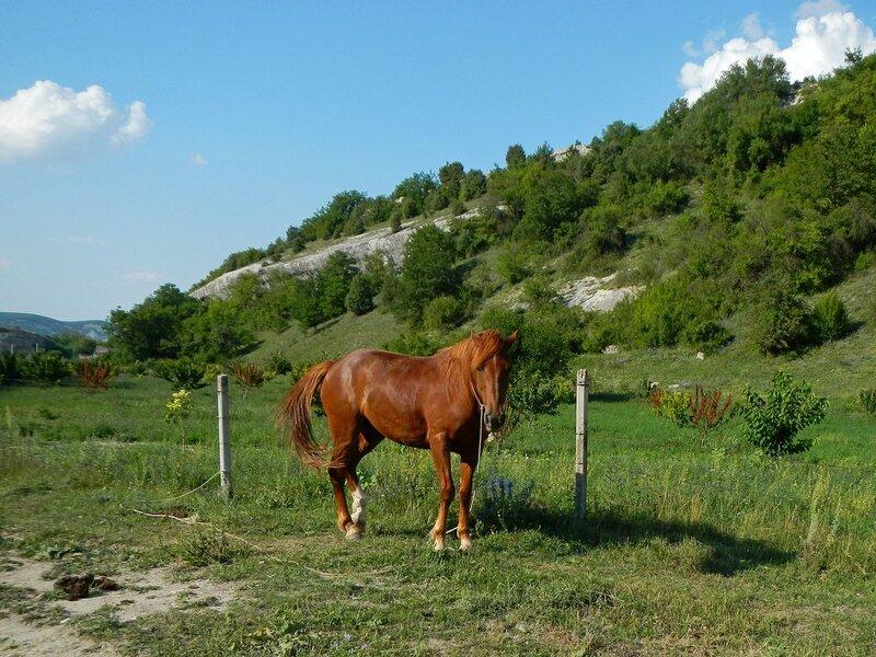 Лошади, кони и жеребята в пещерном городе Эски-Кермен, Крым DSCN3373.JPG