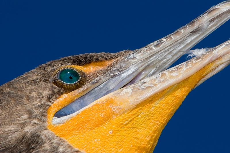 Птицы.Фотограф Miguel A. Leyva