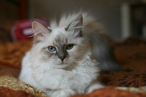 Любимая кошка Инес для Айнэко
