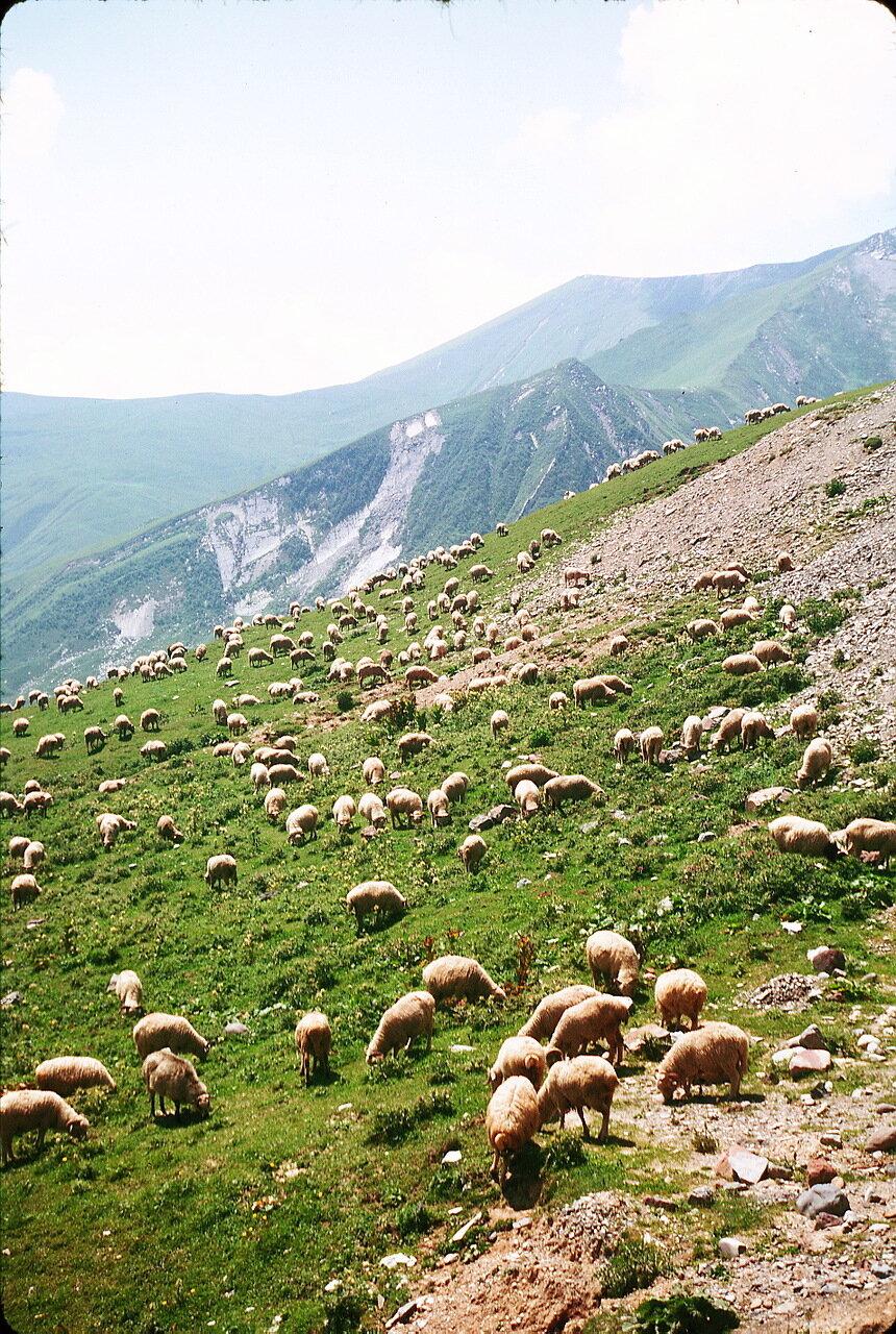 По дороге в Орджоникидзе. Перекресток (2388 м). Хаос камней и стадо овец