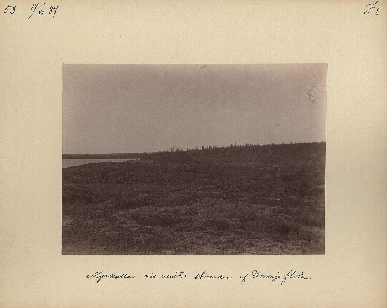17.7.1887 в 7-8 часов утра. Болото на левом берегу реки Воронья