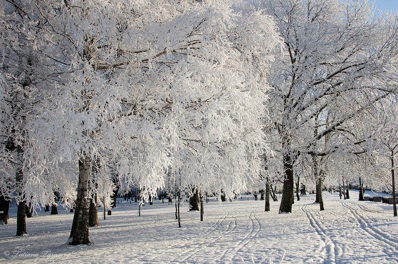 Белое очарование в Кронштадте