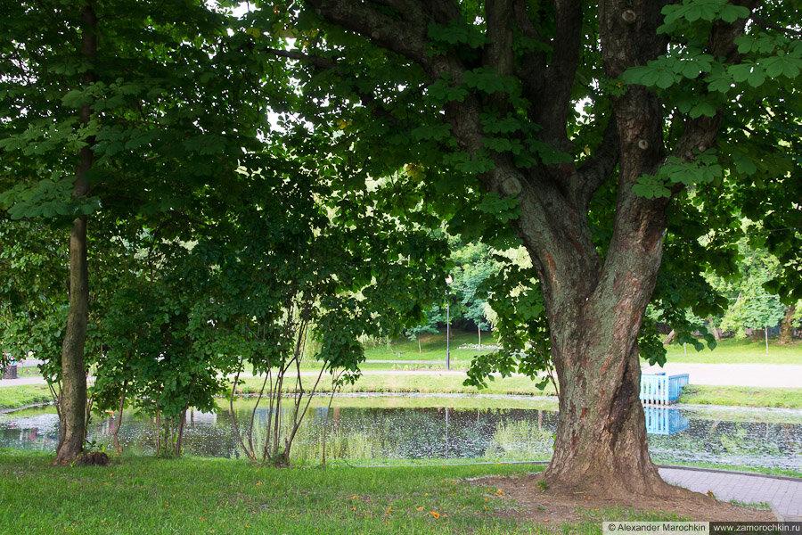 Маленький прудик в Екатерининском парке