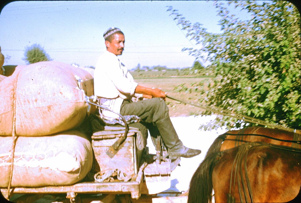 Колхоз им. Сталина под Ташкентом. Транспортировка хлопка