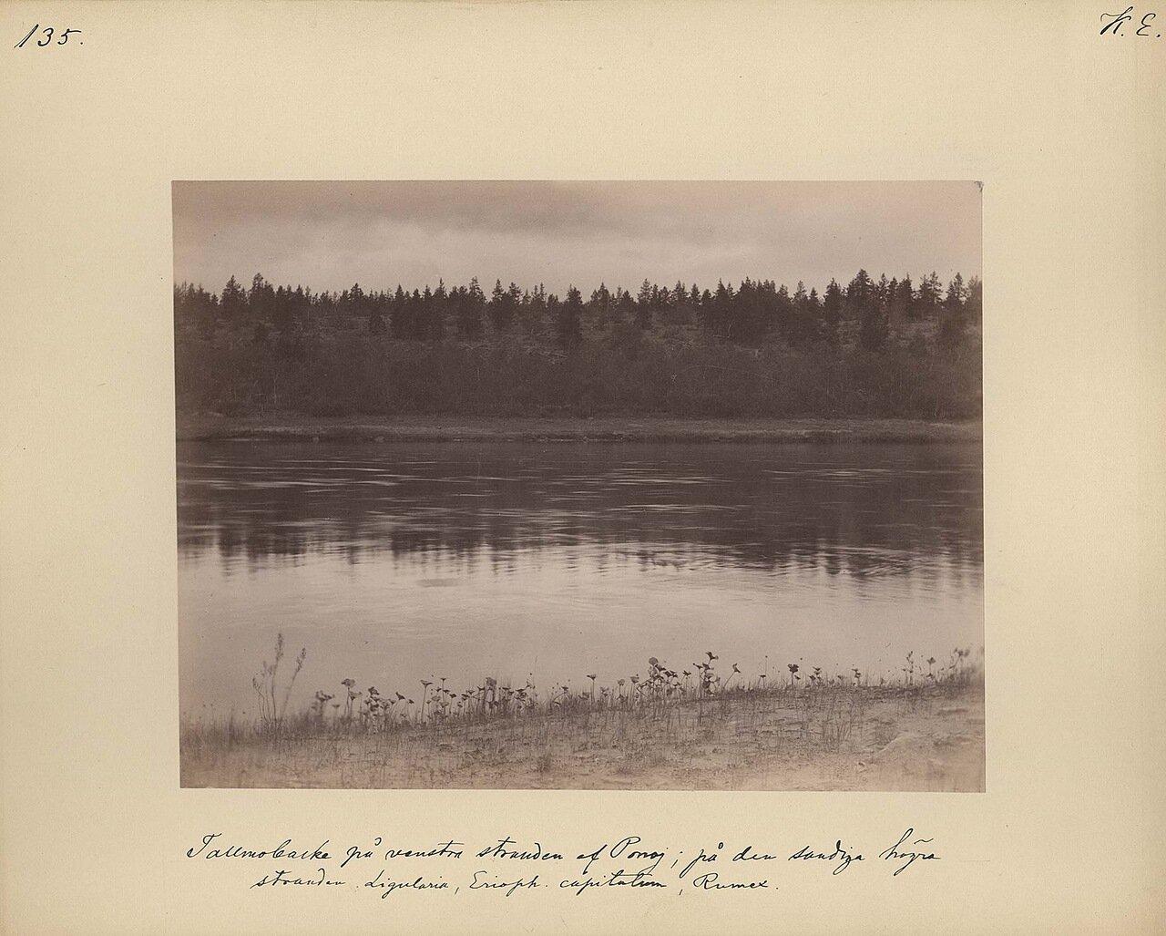 17.8.1887. Панорама реки Поной