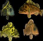 рыба (64).png