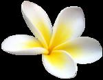 vesidn_seamemories_flower4.png