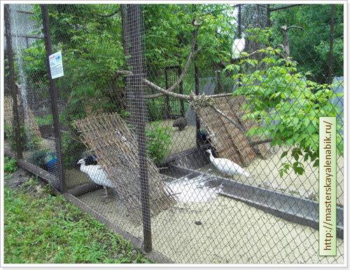 День защиты детей. Зоопарк. Пенза, 2013