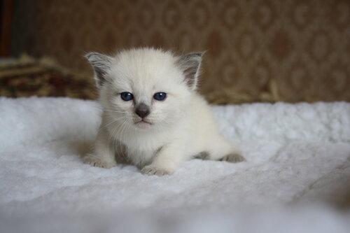 http://img-fotki.yandex.ru/get/6712/135926770.19/0_d09ad_dc3ab5d4_L.jpg
