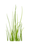 Bush and Grass  (140).png
