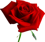 Holliewood_RoseIsARose_Rose25.png