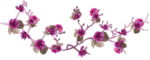 feli_ss_branch with flowers.png