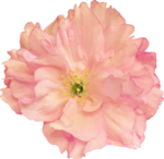 Butterfly Bouquet (45).png