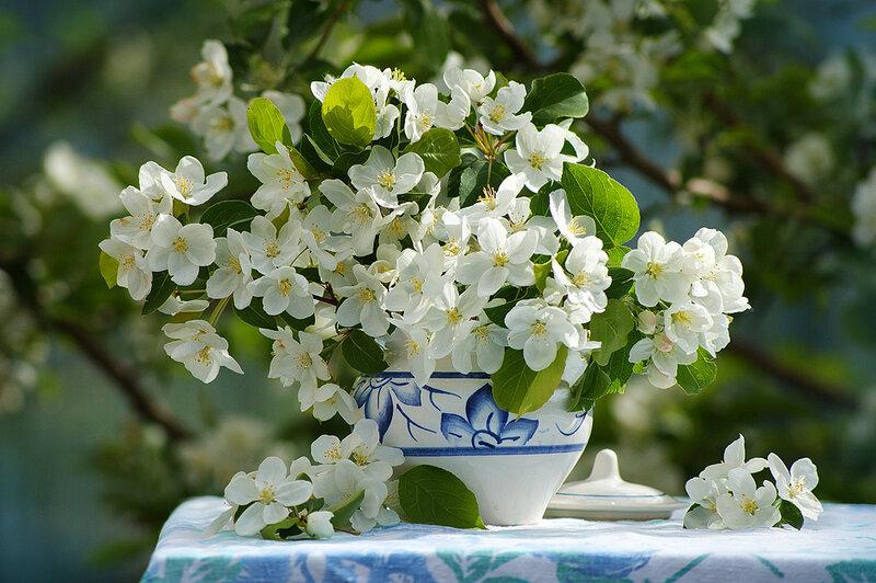 Яблони цветы