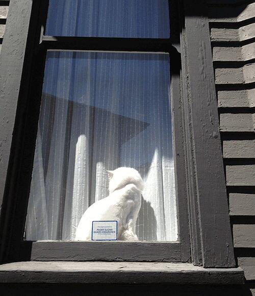 Милый пушистый котенок в окне